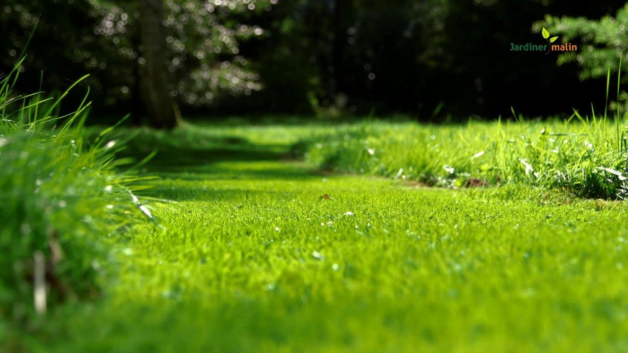 Comment rénover sa pelouse soi-même ?