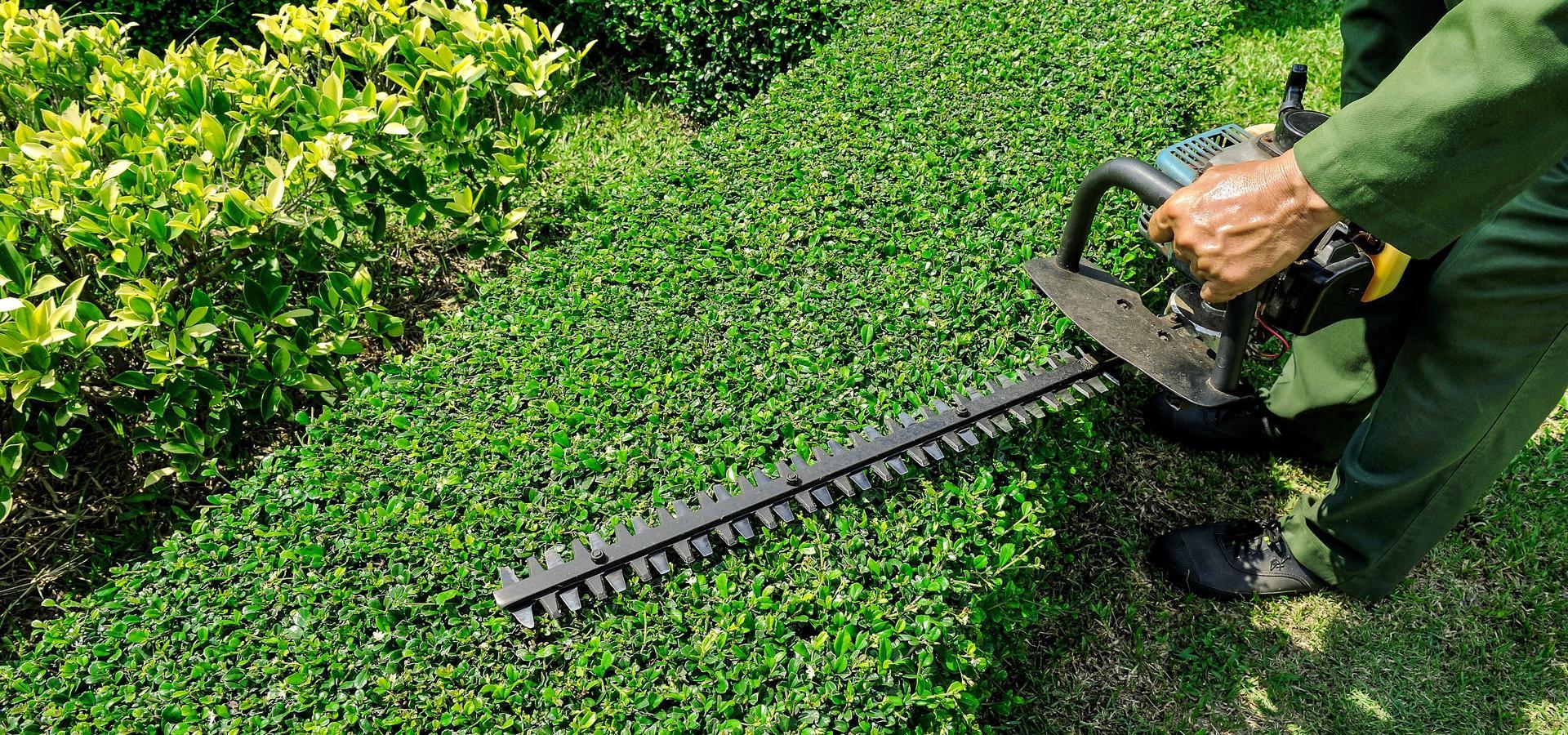Quels outils de jardinage pour tailler une haie ou un arbuste ?
