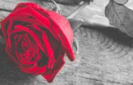 Rose éternelle : c'est quoi et quels avantages offre-t-elle?